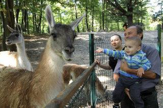 Miskolci állatkert