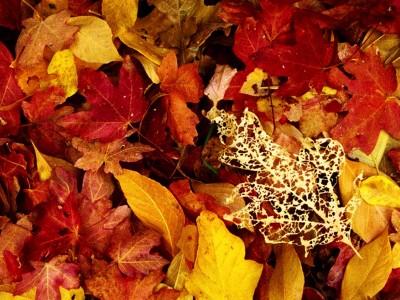 Visegrádi pihenés az őszi szünetben